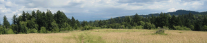 Monthly Trail Maintenance - Restore Habitat and Maintain Trails at Powell Butte @ Powell Butte Nature Park | Portland | Oregon | United States